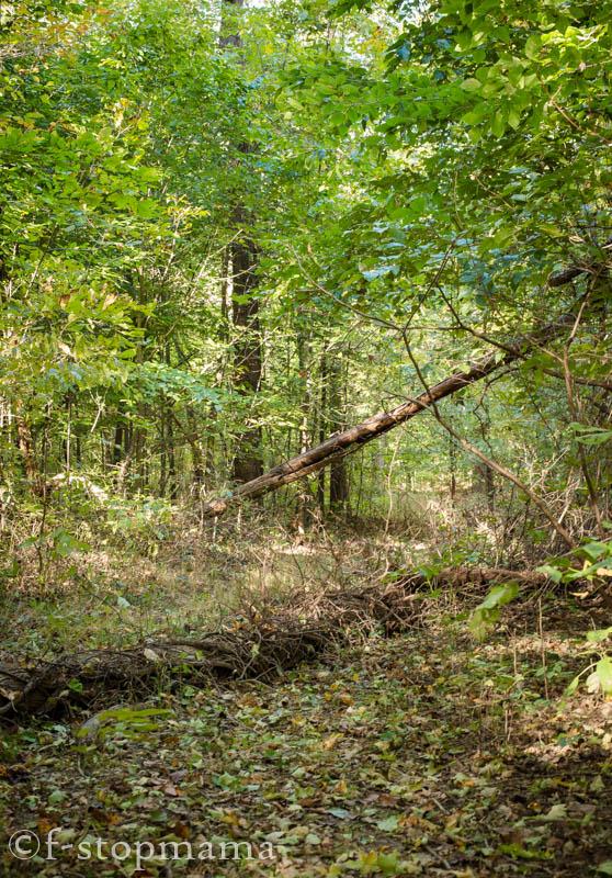 Fallen logs