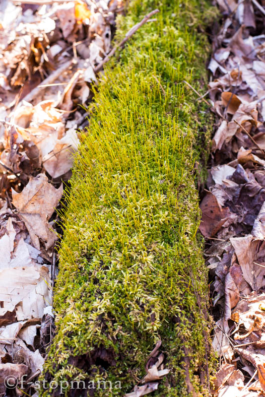 Moss growing on a log