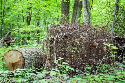 aging, log, old fence