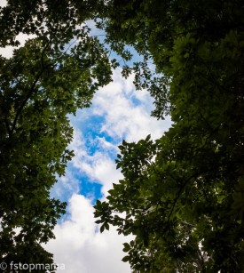 Sky framed in the trees
