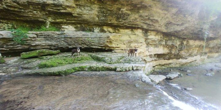 A Return to McCormick's Creek + 3 Dog AdventureContinues